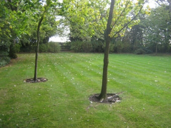 EY Lawn 3