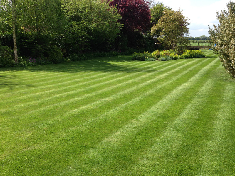 Grass loves warmer weather