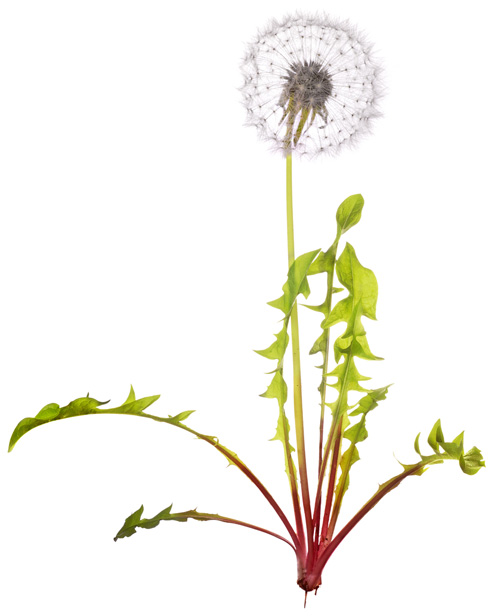 feedweed