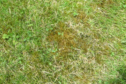 Is moss a problem for you?