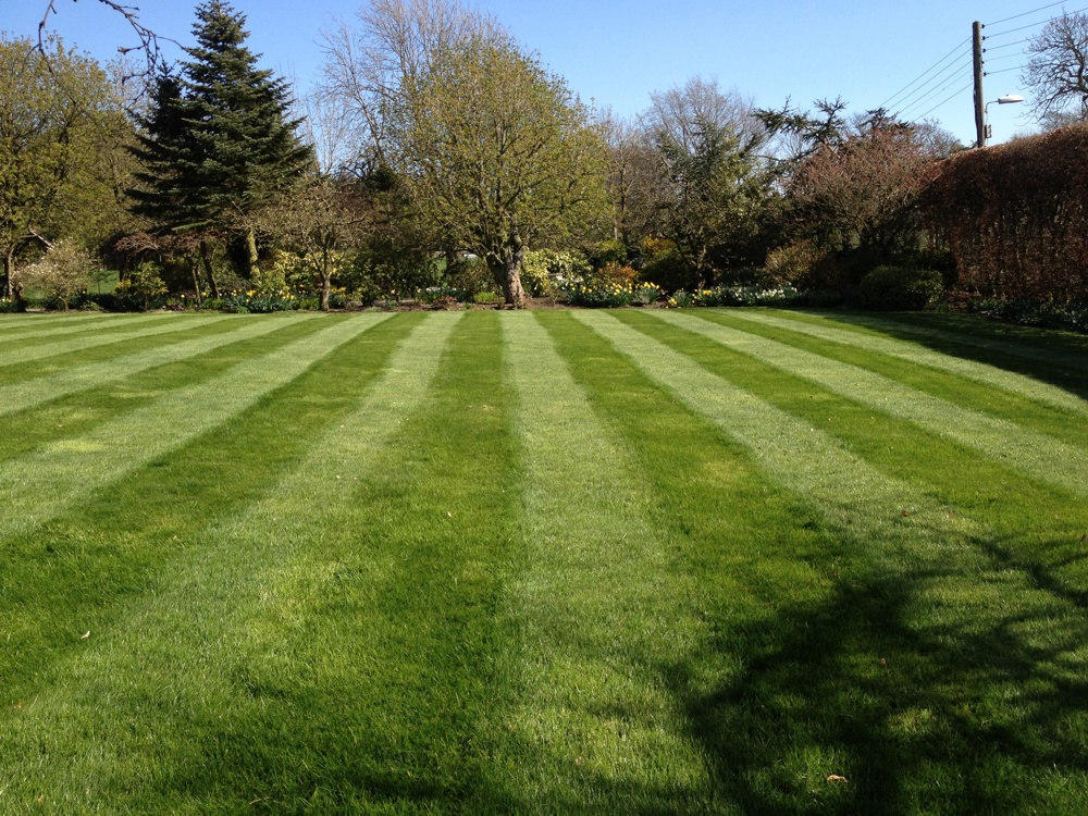 Hereford lawn 1