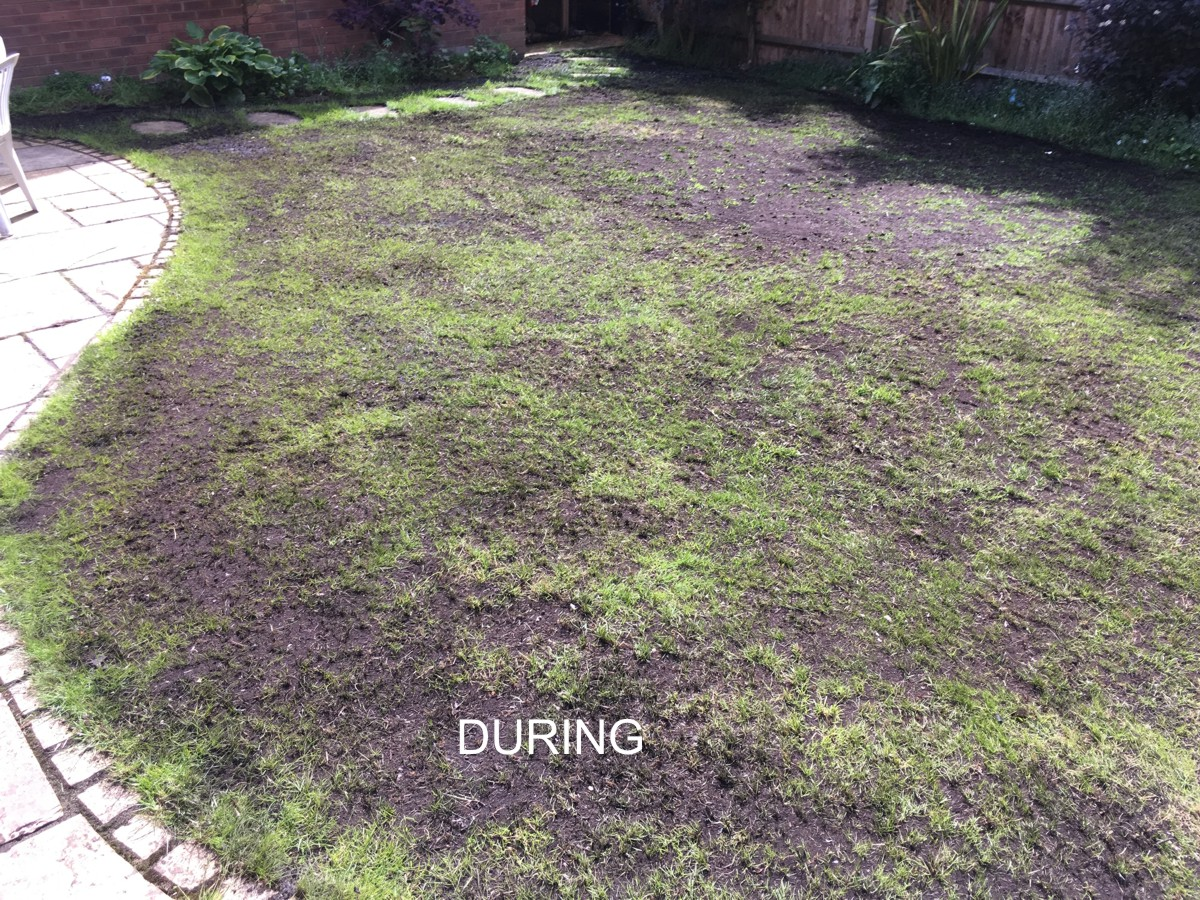 Aylesbury lawn 1 - during