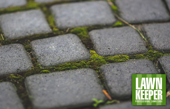 Hard surface moss control: when to do it and how long it takes