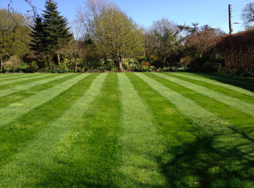 How to Care For Your Lawn This Summer
