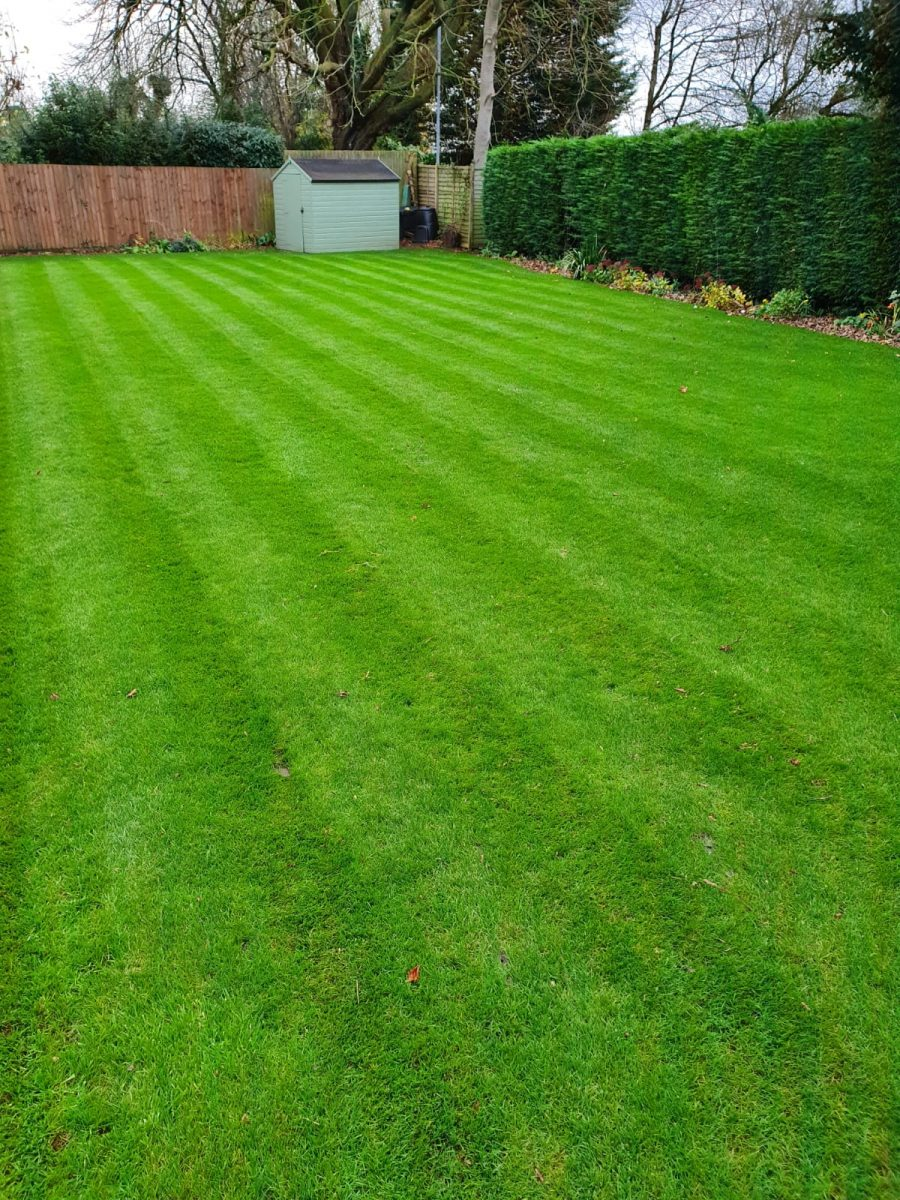 Lawn looking best ever